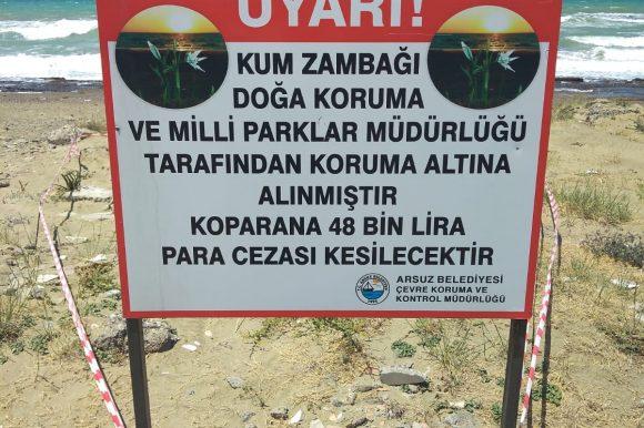 Arsuz'da Kum Zambakları Koruma Altına Alındı